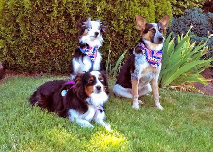 Yakima Valley Veterinary Clinic  image